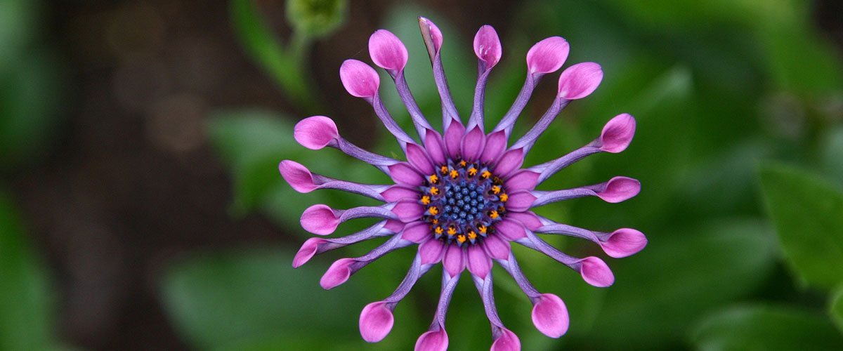 Testimonials   Reviews   Who We Are   Vitalship Naturopathic Family Medicine