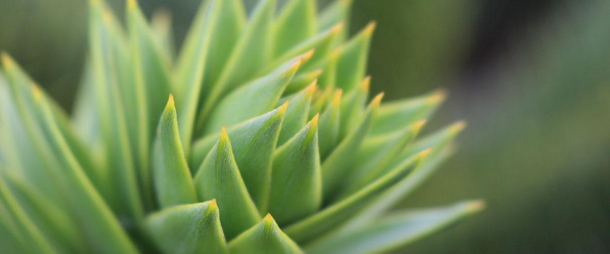 Botanical Medicine | Naturopathic Services for Paint Relief | Arizona Doctors | Vitalship Naturopathic Family Medicine
